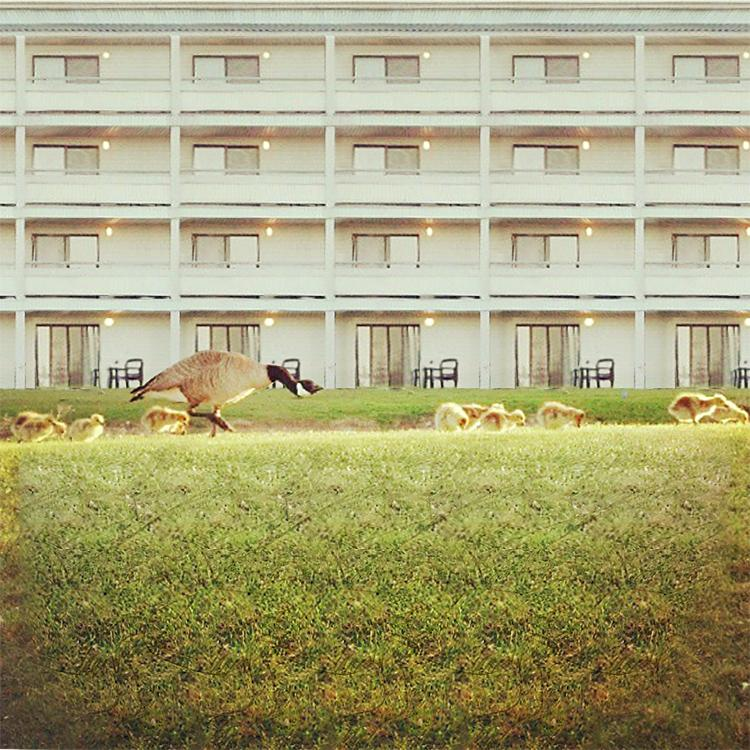 Stereogram by 3Dimka: @hereskenny. Tags: goose gees apartments grass , hidden 3D picture (SIRDS)