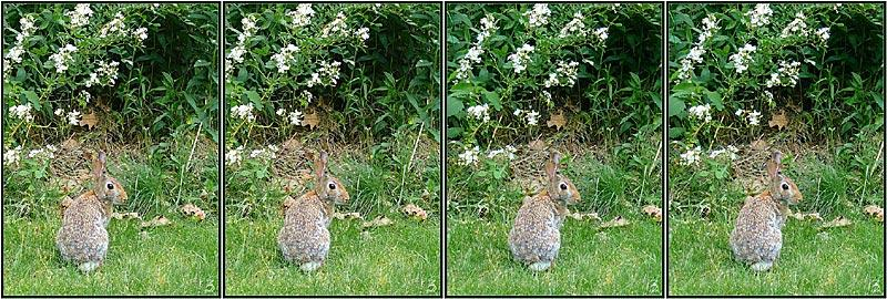 Stereogram by 3Dimka: Rabbits. Tags: rabbit,animals,forest, hidden 3D picture (SIRDS)